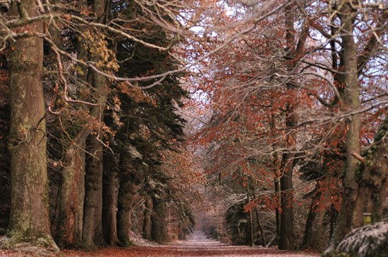 allée rouge forêt domaniale Clohars