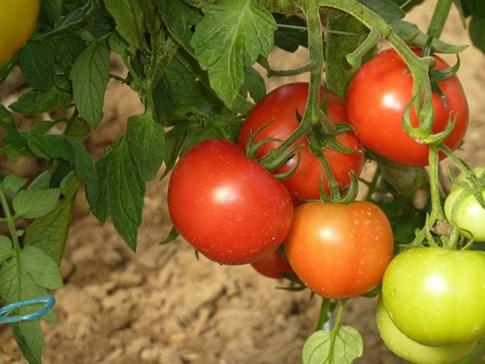 Jardins familiaux Clohars Carnoet